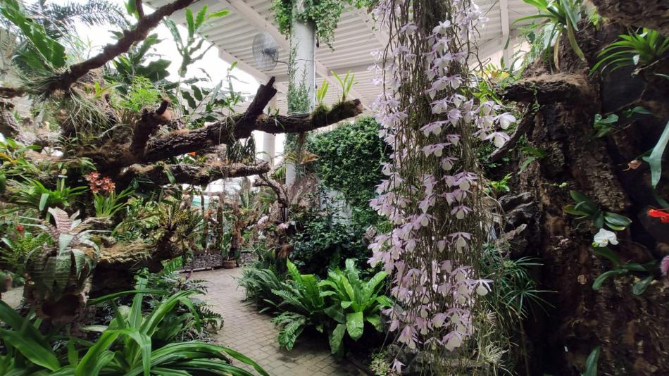 El Parque Botánico-Orquidario de Estepona alberga la floración de más de 150 especies diferentes
