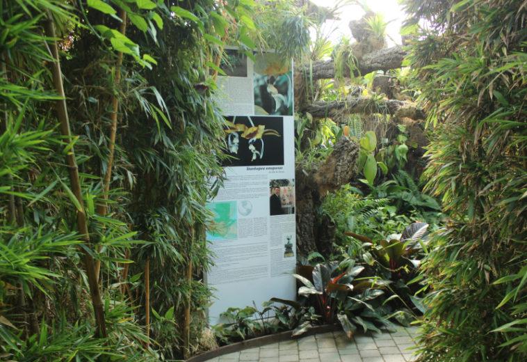 El Parque Botánico-Orquidario dedica un espacio a una nueva especie descubierta en Guatemala que ha sido bautizada con el nombre de Estepona